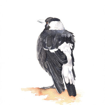 Magpie Painting - Bird wildlife nature art-  Print of watercolor painting 5 by 7 print