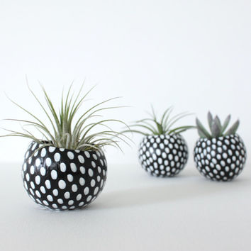 Air Planter with Air Plant - Black with white Dots