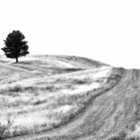 Black & White Photography, Lonely Tree and Road, Black Hills, Fine Art Print, Minimalistic, Meditation, Zen, Home Decor