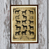 Vintage print Horse art Antique paper Old looking Antiqued decoration 8.3 x 11.7 inches
