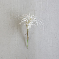 Set of 6 White Air Plants Single Stem Small
