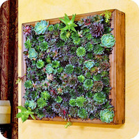 SECRET GARDEN frame - feng shui decor, living wall, living art, fathers day gift, zen garden, cool home decor,  wedding gifts,, succulents