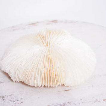 Unique Round Slipper Mushroom Coral Shell with Sharp Ridges