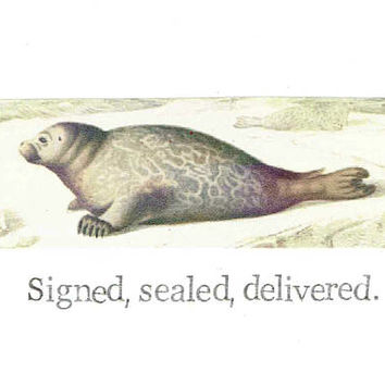 Signed Sealed Delivered Natural History Seal Card | Funny Animal Humor Vintage Nature Love Friendship Wildlife Men Women
