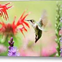 Hummingbird Fancy Metal Print