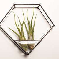 Diamond Shaped Geometric Stained Glass Air Plant Terrarium