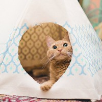 Royal Printed Cat Teepee - $58