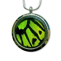 Real Green Birdwing Butterfly Necklace