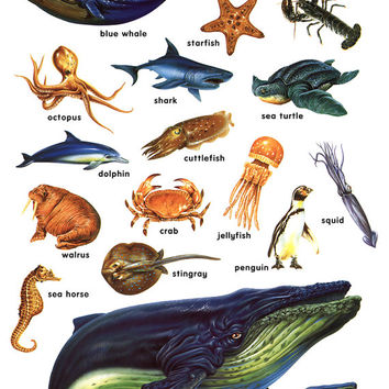 Ocean Life Poster, Lobster, Whale, Shark, Dolphin, Octopus, Starfish, Penguin, Squid, Walrus, Stingray