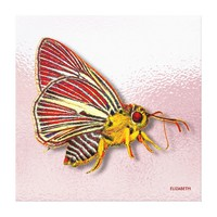 Psychedelic Colorful Fantasy Butterfly Drawing Canvas Print