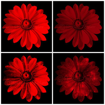 Goth Photography - Dark Art -  Floral Home Decor - Red Daisy, Grey, Purple - Flower Wall Hanging - Printable Fine Art