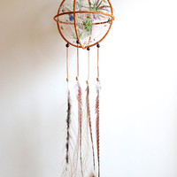 Large Dreamcatcher Terrarium. Living Consciously With One Another, In Between the Geometric Lines.