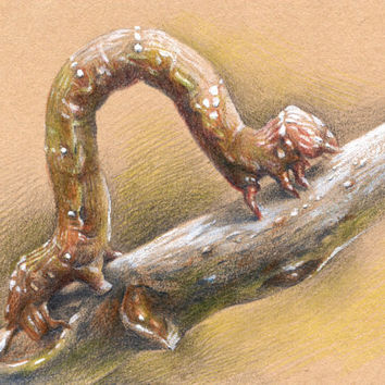 "Artist Trading Card, ACEO Original drawing ""Larva"", paper, pencil"