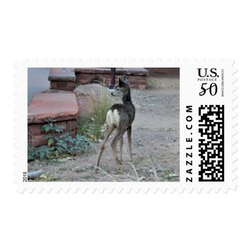 Mule Deer Fawn Zion National Park Postage