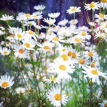 Daisy Dream - fine art photograph, flower photography, floral botanical wall art, daisy photograph, daisy print, flower garden