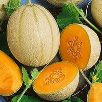 Cantaloupe Imperial 45 Seeds (Cucumis melo) 100+Seeds