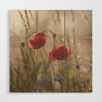 Poppy in sunrise my world Wood Wall Art by tanjariedel