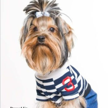 Dressed Up Yorkie Terrier: (Website Password Organizer ) Never Worry About Forgetting Your Website Password or Login Again!