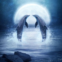 Dolphin Dance Art Print by EnchantedWhispers
