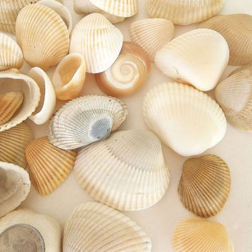 Bulk Seashells 80 pcs, clam shells, Craft Sea Shells white, tan beige brown, cream ivory Beach wedding decor Nautical Coastal jewelry making