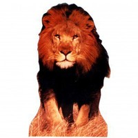 Advanced Graphics Lion Life-Size Cardboard Stand-Up - 231 - All Wall Art - Wall Art & Coverings - Decor