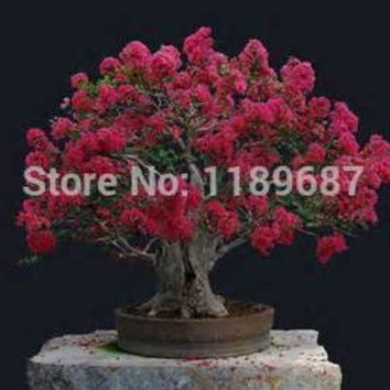 100 pcs  Home Plants HEIRLOOM SEED CRAPE MYRTLE BONSAI FLOWER SEEDS Garden Supplies Creepers perfume Flower