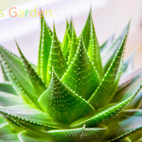 New Arrival!1000 PCS/Lot chinese barbados aloe seeds, popular flower seeds, Green Plant for home garden!