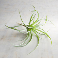Faux Tillandsia Air Plant Stem