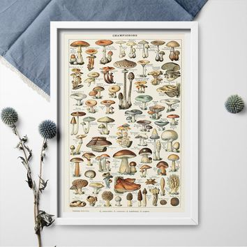 Poster And Print Wall Art Science Biology Mycology Mushroom Fungus Toadstool Chart Poster Canvas Painting Home Decor Art
