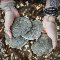 Pyrite Sun Scrying Mirrors for uncovering the answers that you seek