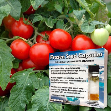 Lakota Tomato Seeds (Lycopersicon esculentum) + FREE Bonus 6 Variety Seed Pack - a $30 Value!
