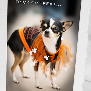 Chiwawa PRINT or CARD Fine photo decor Home cottage office Dress up puppy Funny halloween dog Gift for him boyfriend husband father her mom