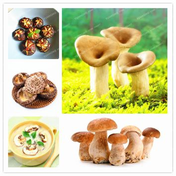 Rare Mushroom Seed Delicious Green Vegetable Organic Healthy Edible Vegetable Seed Bonsai Plant In Garden And Courtyard 100pcs