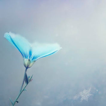 Ice Blue Flower Photography, cool silver blue winter wall decor- winter floral print- shabby chic womens wall art