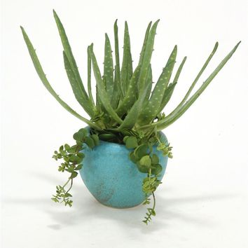 Aloe and Hanging Succulents In Turquoise Planter (pack 2)