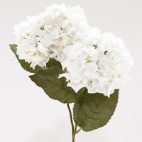 White Hydrangeas, Set of 2 - World Market