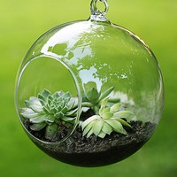Fashion Transparent Clear Glass Terrarium