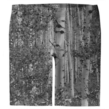 Black and White Aspen Birch Trees