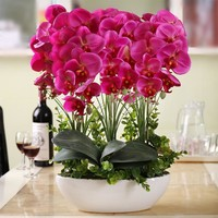 Phalaenopsis Room Interior Decoration Flowers Potted 100 Seeds