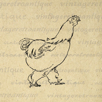 Printable Chicken Image Graphic Download Farm Animal Digital Illustration Vintage Clip Art for Transfers Printing etc HQ 300dpi No.2599