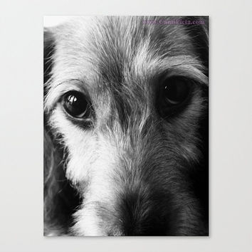 "Wire Hair Dachshund Print - Black & White Photograph (8"" x 10"") - Wall, Art, Home, Decor, Dachshund, Wiener Dog, Doxie, Pet"