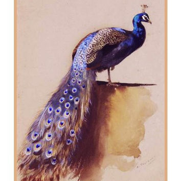 Peacock By Naturalist Archibald Thorburn's Bird Counted Cross Stitch or Counted Needlepoint Pattern