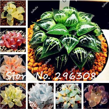 100Pcs/Bag Real Rare Succulent Seeds, Perennial Angiosperm Plants Flower Seeds, Pseudotruncatella Living Stone Lithops Seeds