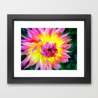 Pink yellow dahlia Framed Art Print by cycreation