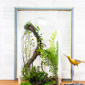 Artificial plants, Cabinet of curiosity, Globe dome terrarium bell-shaped glass, gift birthday wedding, Decoration vintage