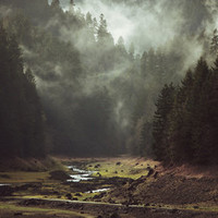 Foggy Forest Creek Art Print by Kevin Russ | Society6