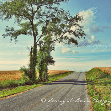 country road art photo, highway, empty road, trees clouds wheat fields, pastoral rural scene, zen, summer