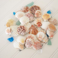 45 Seashells scallop shells mixed colors, 45 ct craft sea shells, beach coastal ocean wedding decor, jewelry making, diy bulk shells