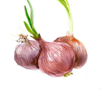 Red Onions painting original watercolor art 12 x 9 in kitchen art restaurant painting