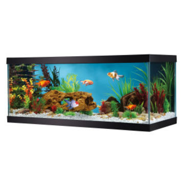Glass Aquariums » Top Fin® 20 Gallon Glass Aquarium | PetSmart